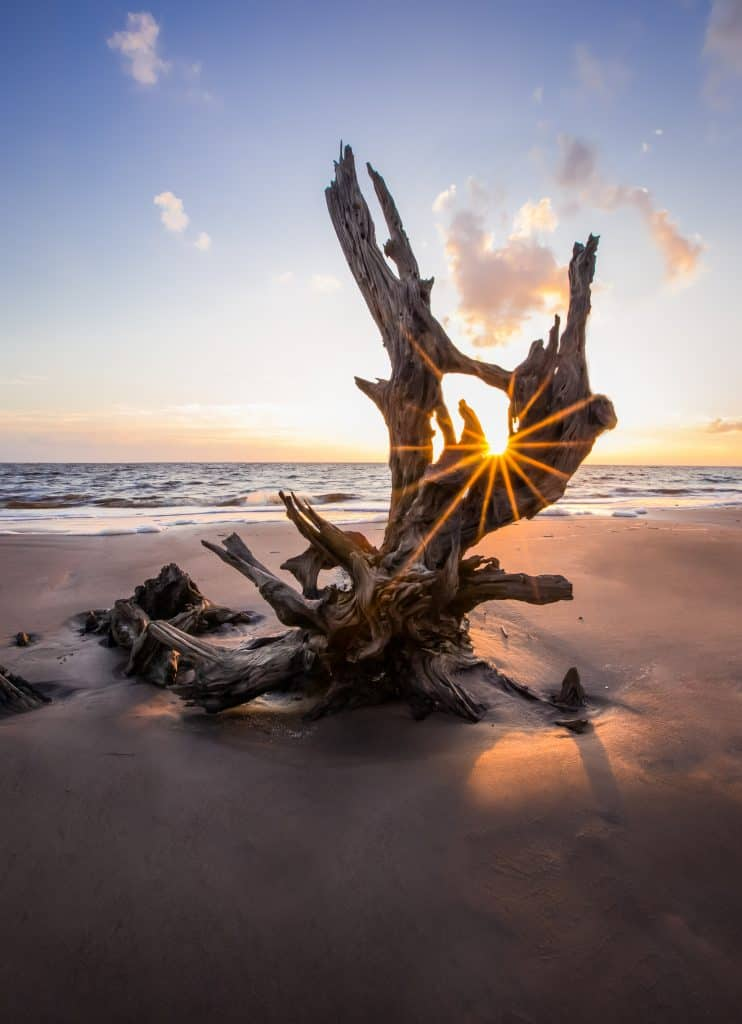 The sun peeks through the sun-bleached trees on Boneyard Beach, your reward for trekking Black Rock Trail, one of the best trails for hiking in Florida.