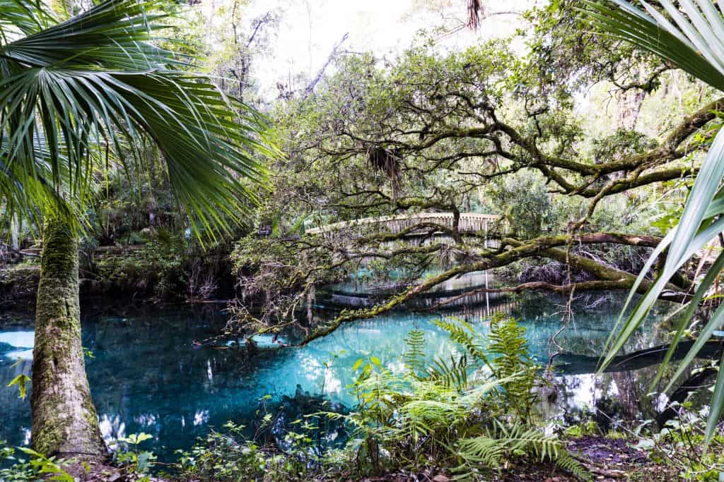The crystalline waters along the Jupiter Creek National Trail provide a gorgeous backdrop for one of the the best Florida hiking trails.