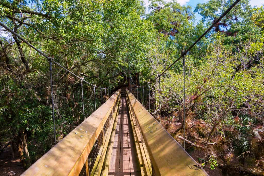 The suspension bridge hangs in the canopy of the oaks at Myakka River State Park, one of the most unique Florida hiking trails.