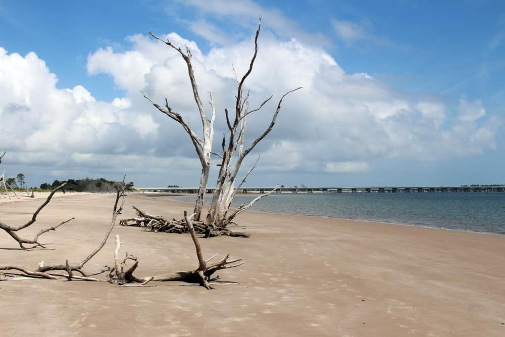 Head to Big Talbot Island in Jacksonville for a secluded beach with trails.