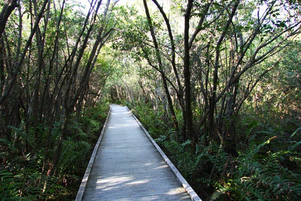The boardwalk at Glover Blight winds through Rotary Park Environmental Center, one of the best things to do in Cape Coral.