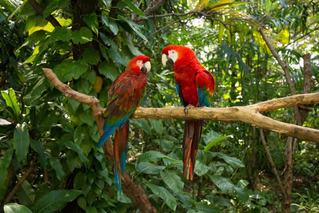 Parrots perch in a tree at Jungle Island, one of the best things to do in Miami.