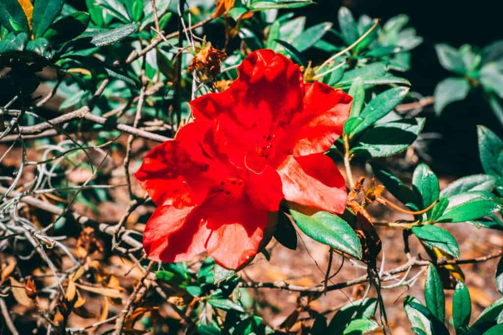 A flower blooms in the beautiful Azalea Kraft Garden, one of the best things to do in Orlando.