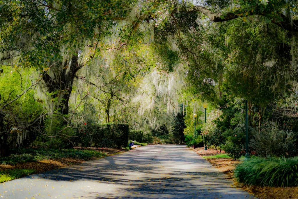 A paved walkway winds through Leu Gardens in Orlando, Florida.