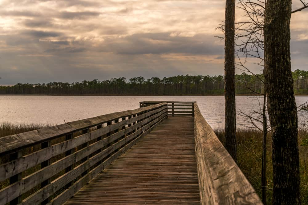 The Tarklin Bayou Preserve State Park is one of the great outdoor things to do in Pensacola
