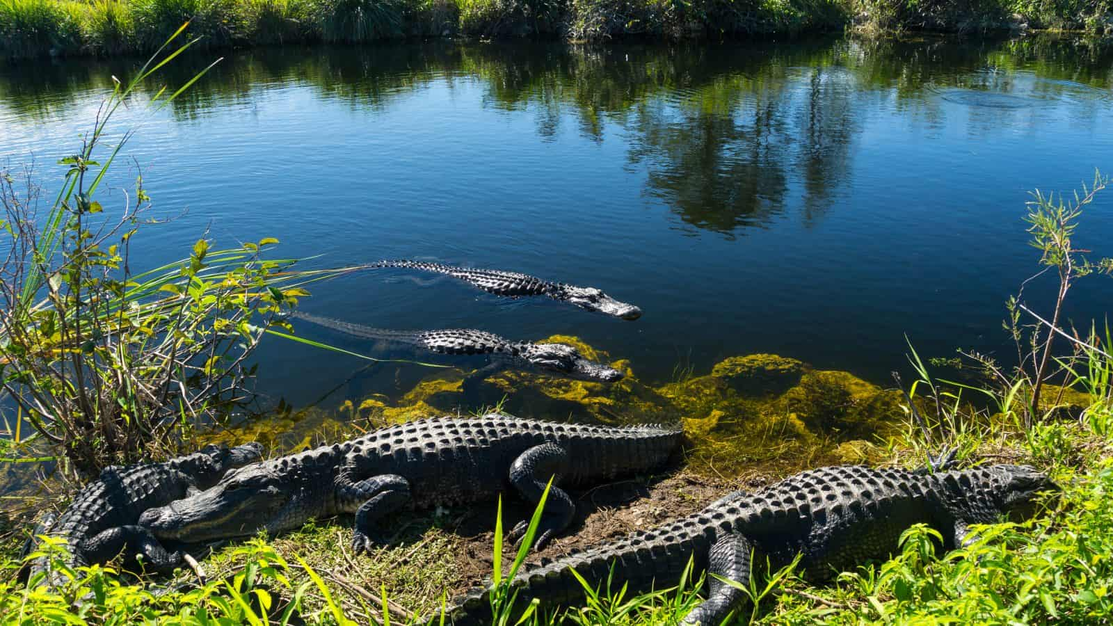 things to do in Everglades National Park