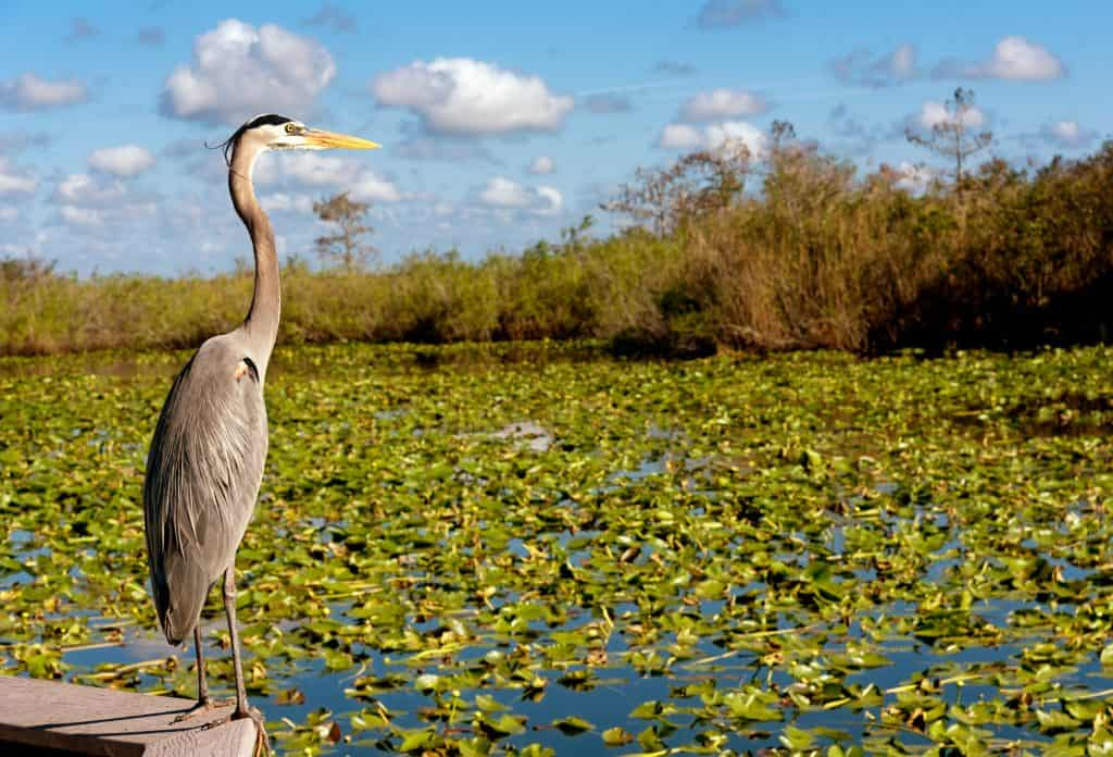 A heron perches on a stone wall at the Everglades National Park.