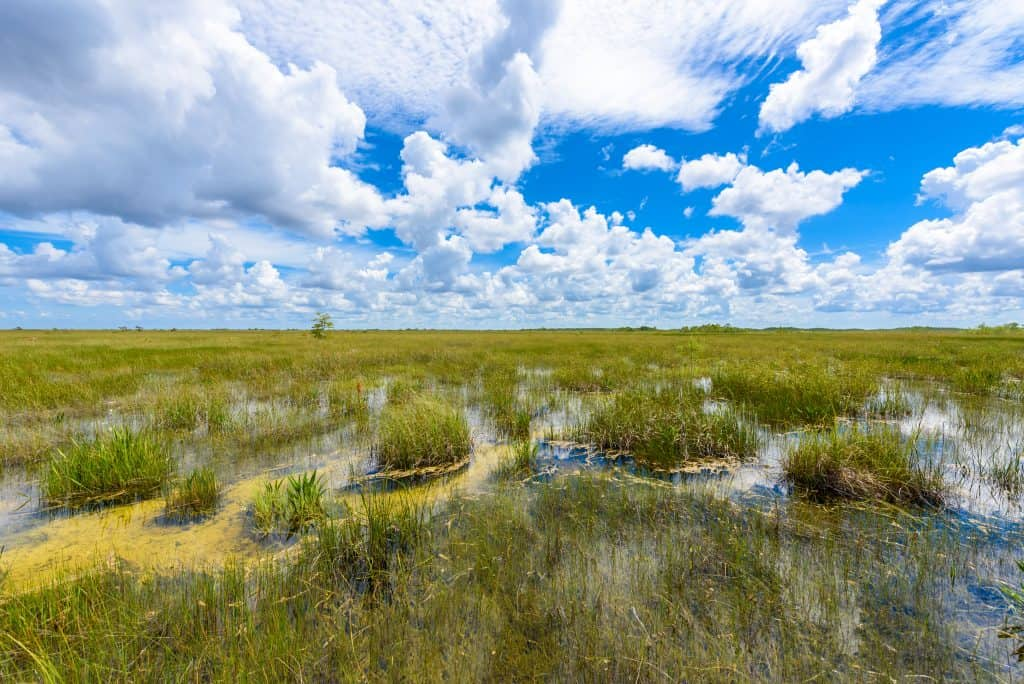 A view of the swamps from the Pa-Hay-Okee Lookout Tower, one of the best things to do in the Everglades.