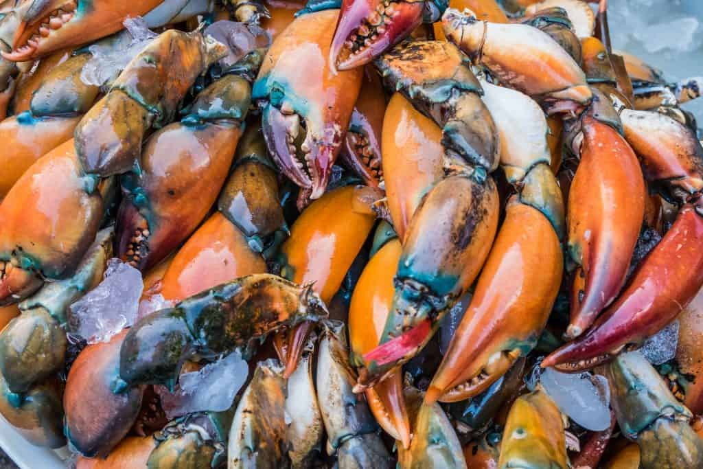 Freshly fished stone crabs wait to be eaten at Everglades City!