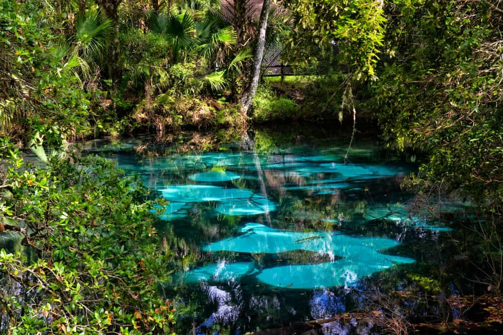 The surface of Juniper Springs, always ever changing, as seen through its clearest of blue waters, one of the best Florida springs with camping.