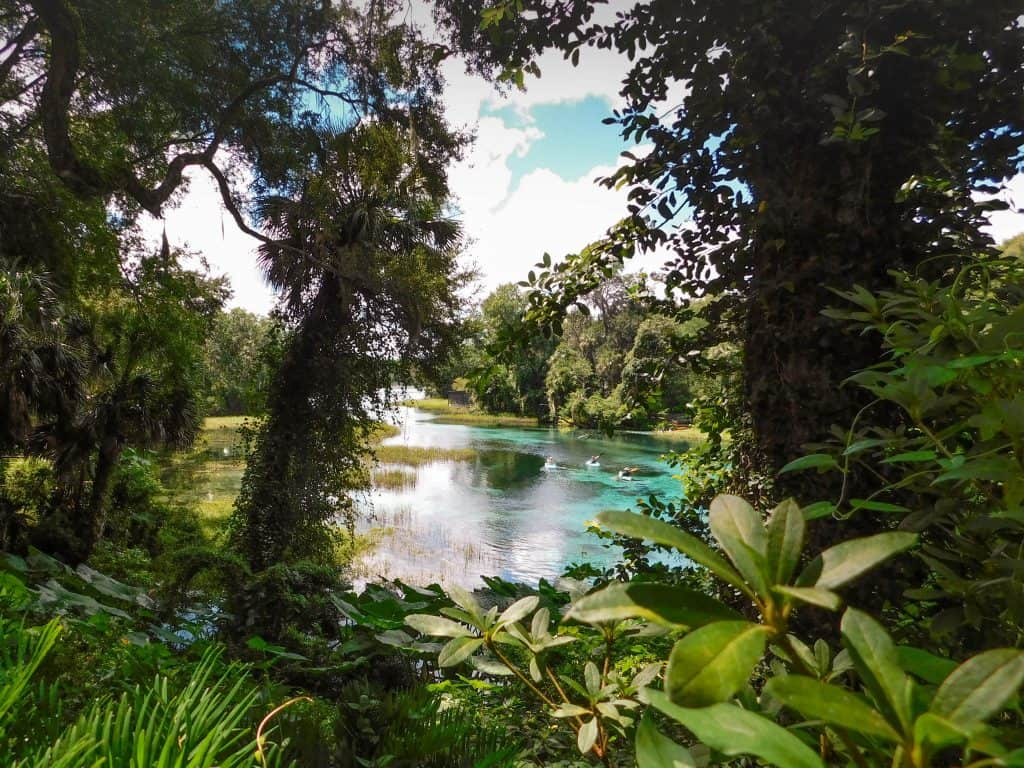The crystal clear waters of Rainbow Springs can be seen through the thick trees and foliage.
