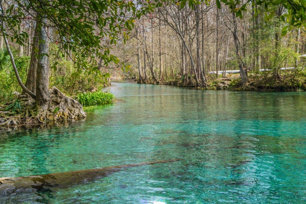 The aquamarine waters of Weeki Wachee winds through trees and over logs seen through the clear water, one of the best Florida springs with camping.