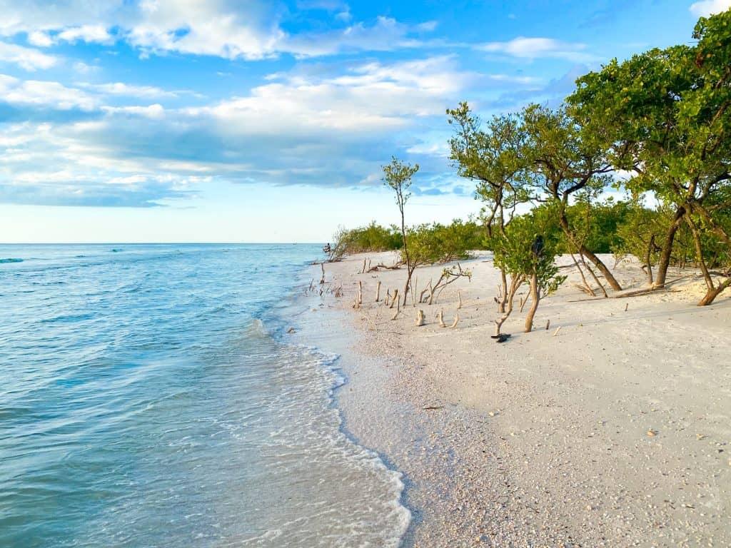 Drift wood at honeymoon Island North Beach