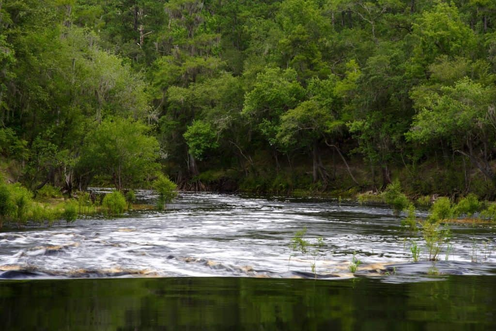 The river rapids of the Suwannee River, perfect for expert kayaking in Florida.