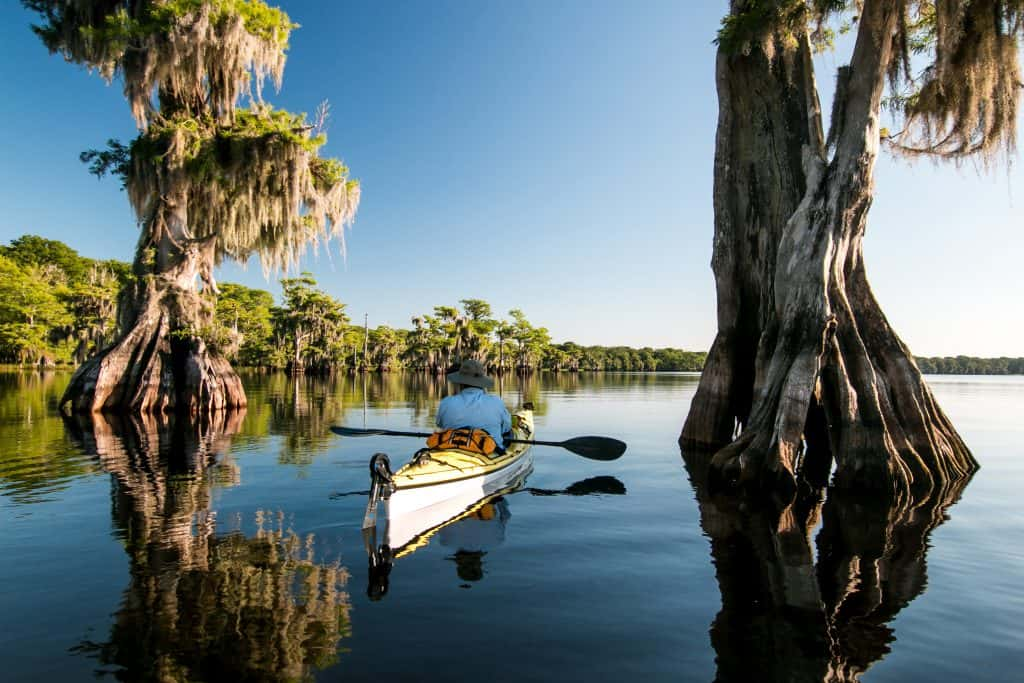 A kayaker paddles between two giant Bald Cypress trees jutting out from the water in the middle of Blue Cypress Lake.