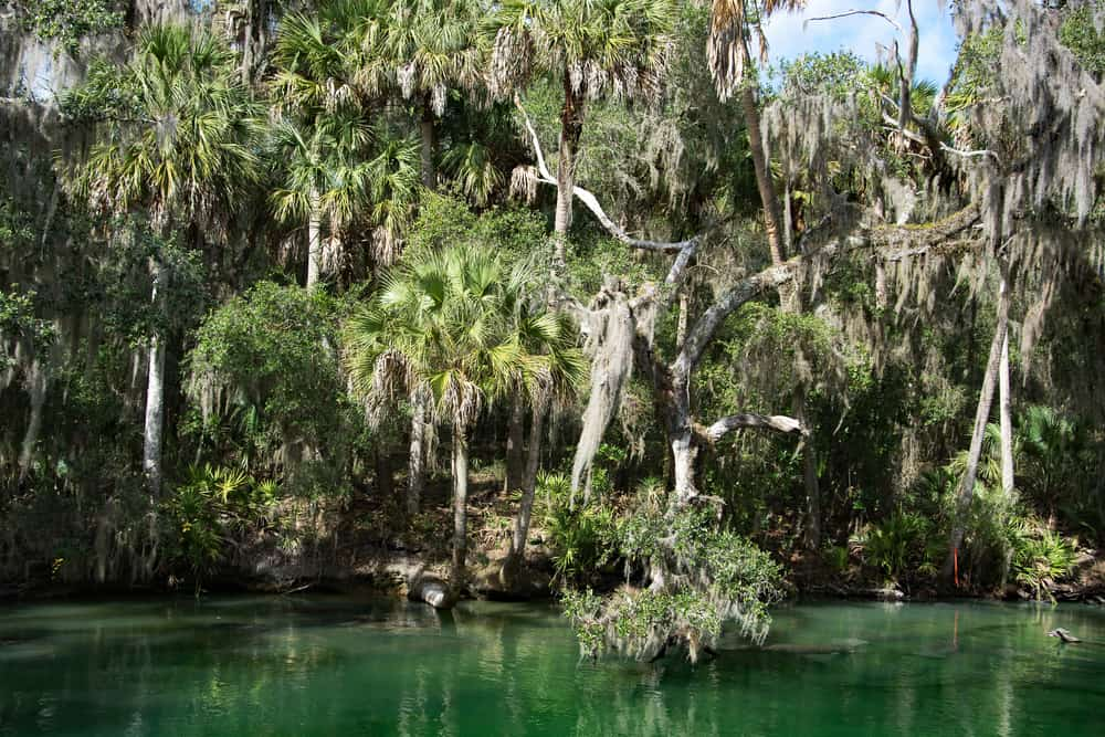 Trees dripping with Spanish moss hang over the green waters of Blue Springs Run, one of the best places for kayaking in Florida.