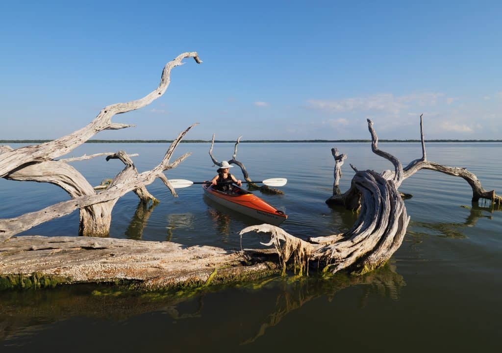 A kayaker paddles between the dried branches while kayaking in the Everglades.
