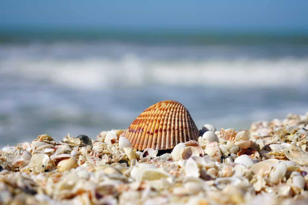 A shell sits on a pile of crushed shells on the best beaches in Sanibel.
