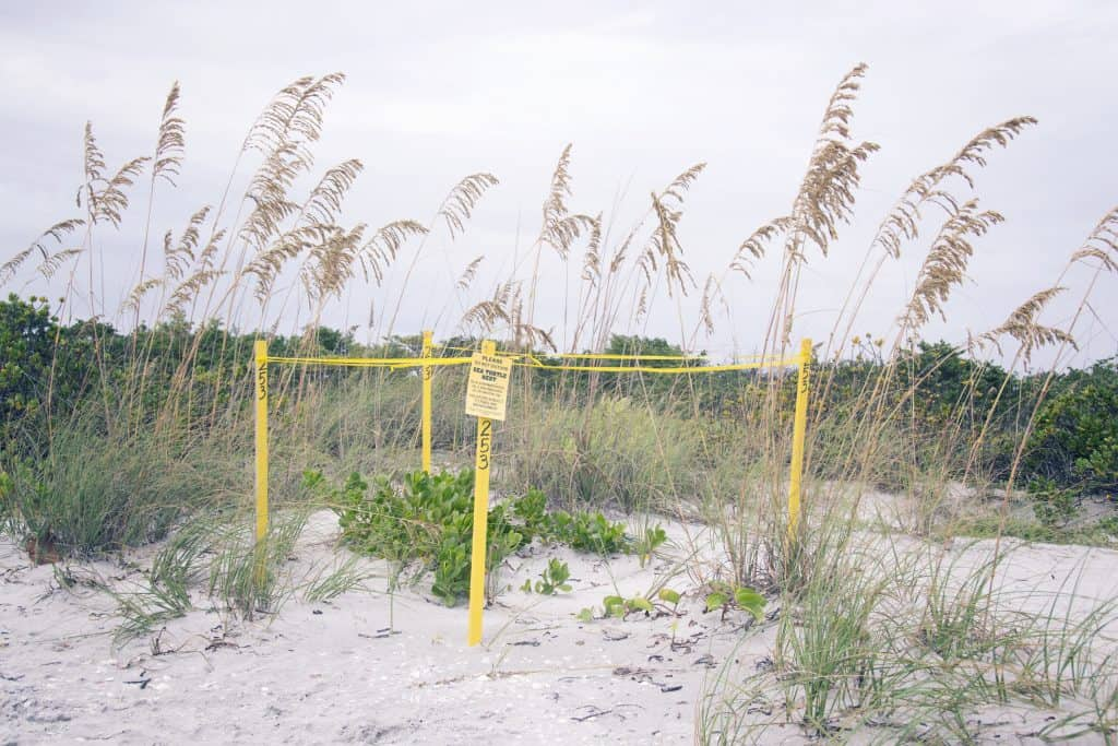 A sea turtles' nest is marked off with yellow caution tape on the best beach in Sanibel.