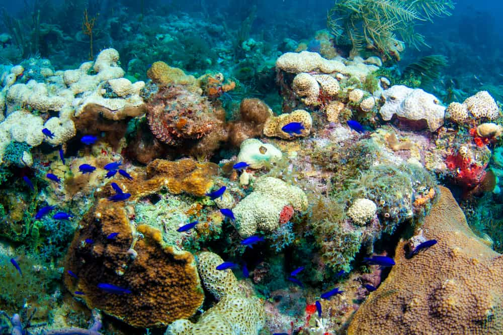 There is so much marine life just waiting to be seen at the dry tortugas