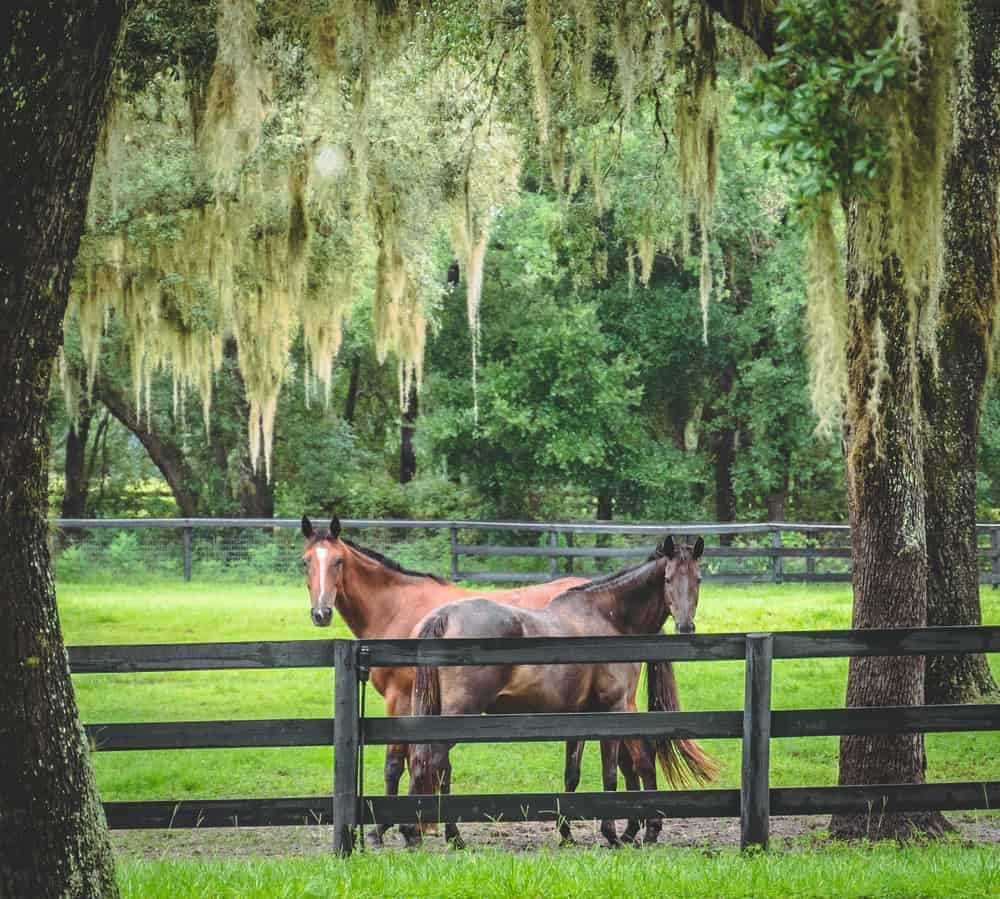if you choose ocala to horseback ride in florida, you will see a state park!