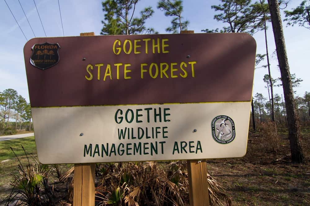why not see goethe state forest by horseback