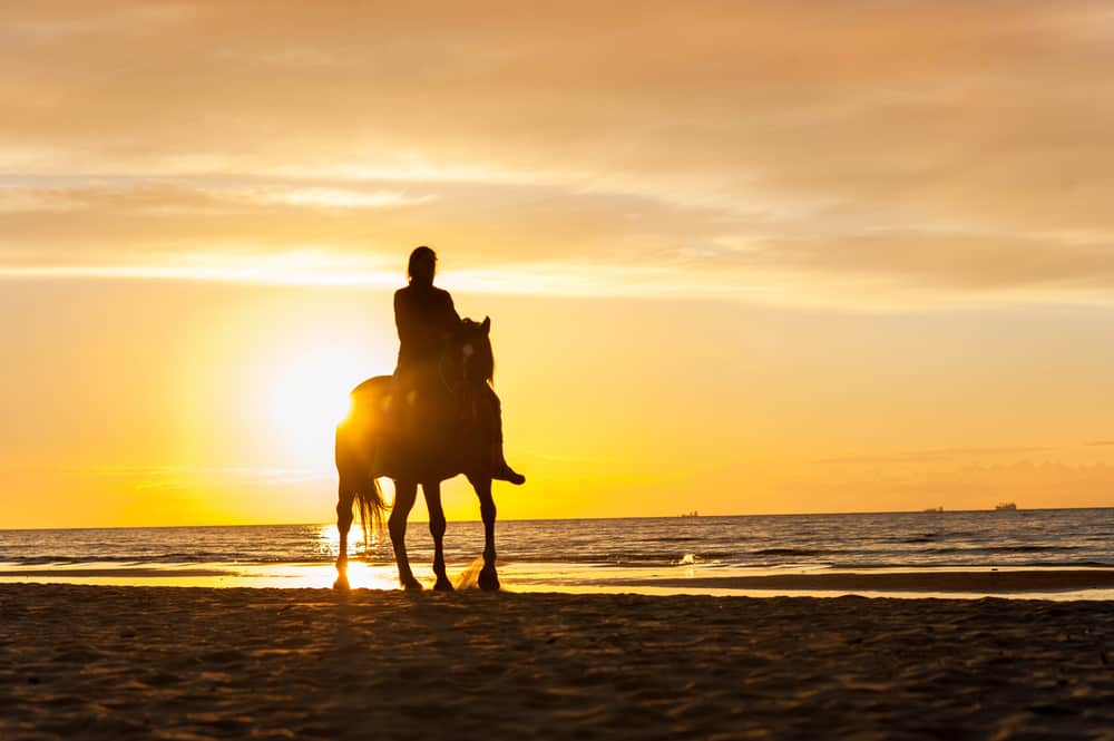 horseback riding in florida is a great way to see an amazing sunset