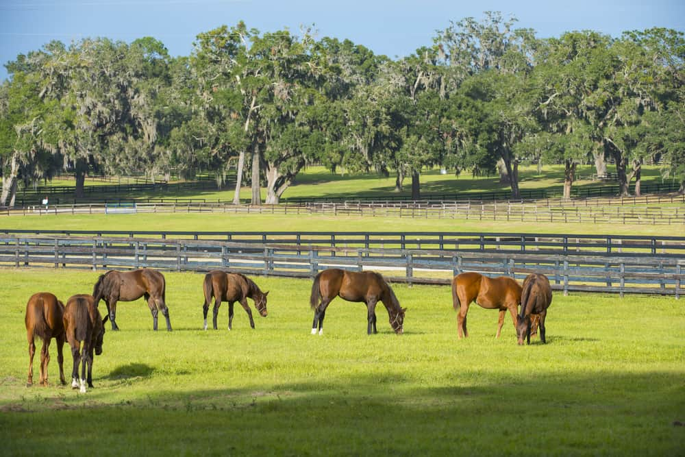 southwest ranches Its the place for horseback riding in Florida if you're wanting to experience the ultimate rural lifestyle