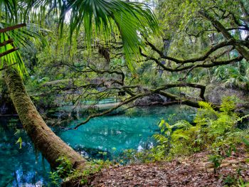 One of the beautiful springs in Ocala named Juniper springs