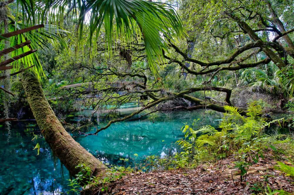 One of the beautiful springs in Ocala named Juniper springs