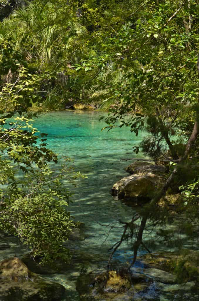 Through the foliage, the crisp, clear waters of Pitt Springs flows in the Ecofina Recreation Area, one of the best things to do in Panama City.