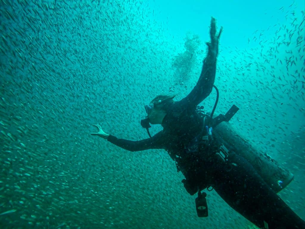 A diver in Panama City Beach is surrounded by a school of tiny fish!