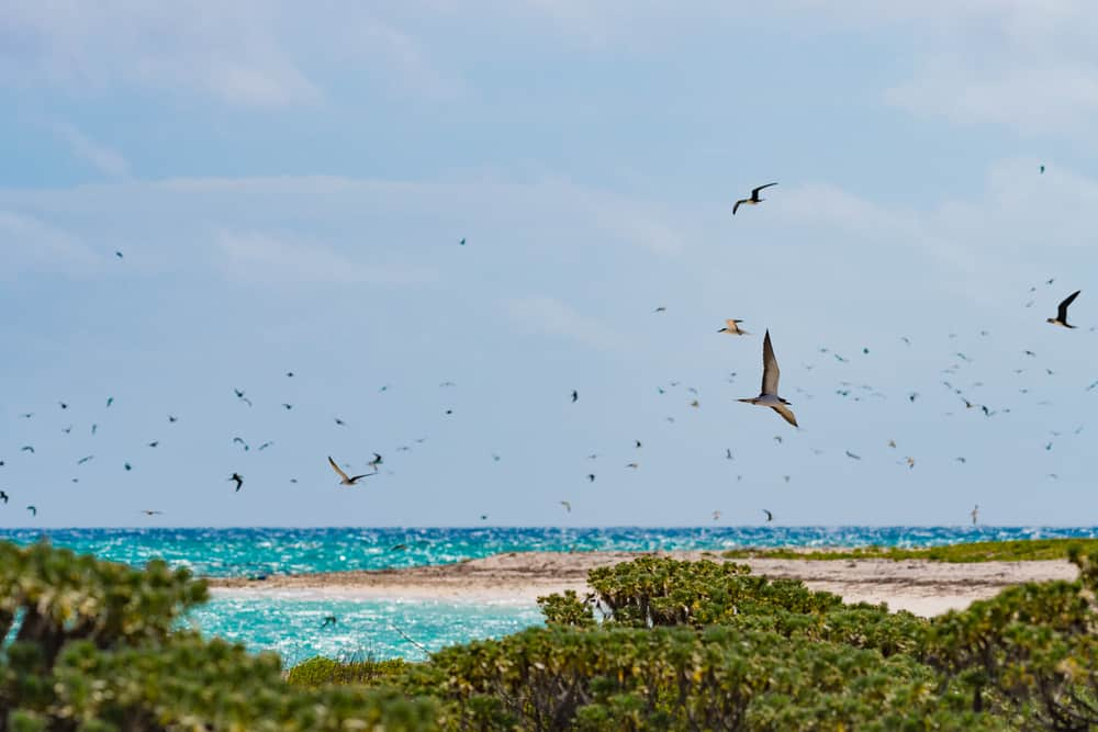 Bird Watching at the national park near Key West