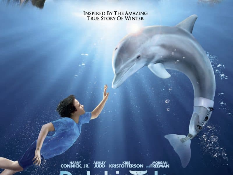 You can visit Winter, the dolphin from the movie at clearwater aquarium in florida!