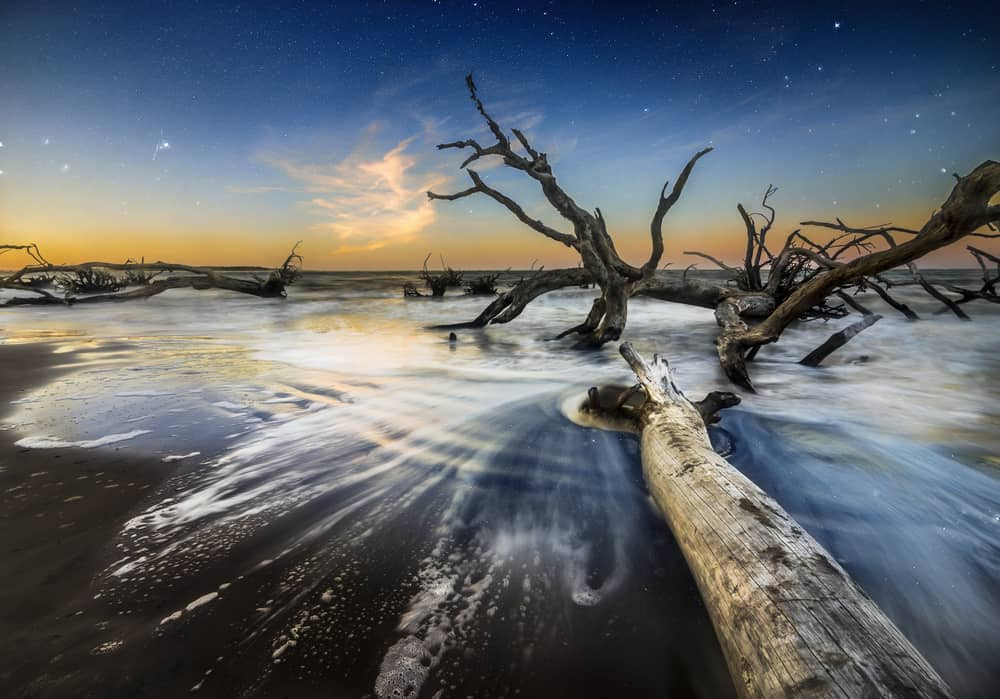 The sun sets, casting shadows over the sun-bleached trees on the shores of Big Talbot Island.