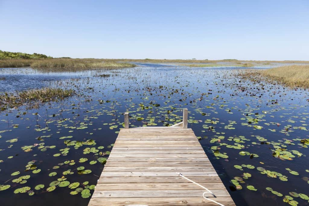 A dock leads out to the waters of the Everglades, dotted with lillies.