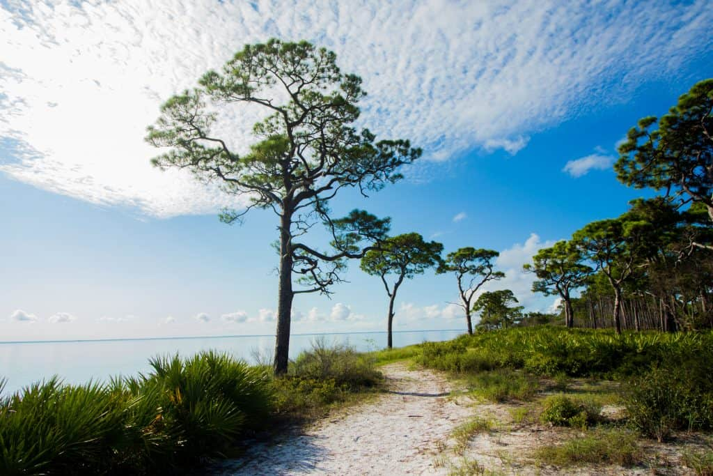 A scenic trail in Florida peers over the water while the sky holds clouds stretched like cotton.