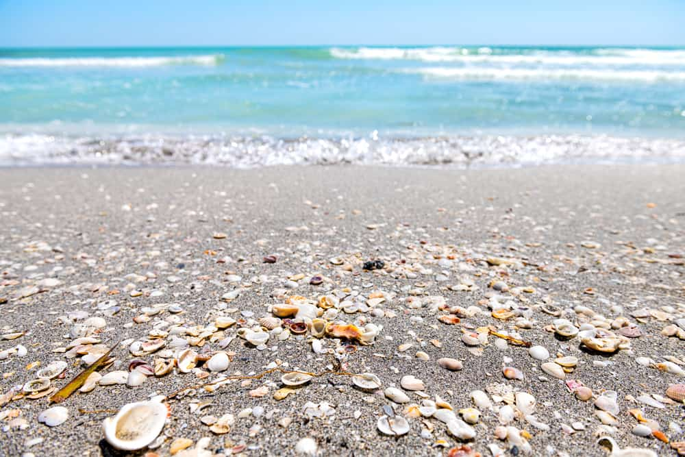 Head to Anna Maria Island on the Gulf Coast for some of the best Florida Beaches with shells.