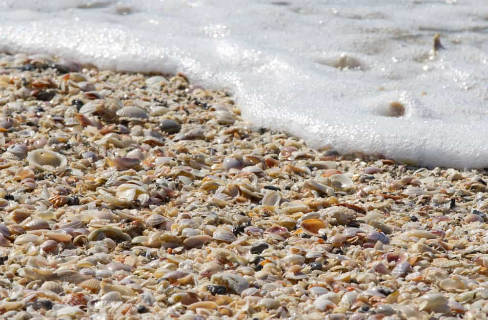 Head to Lovers Key State park just 30 minutes from popular shelling destination Sanibel