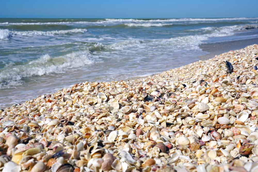 Sanibel Island is one of the best shelling beaches in Florida.