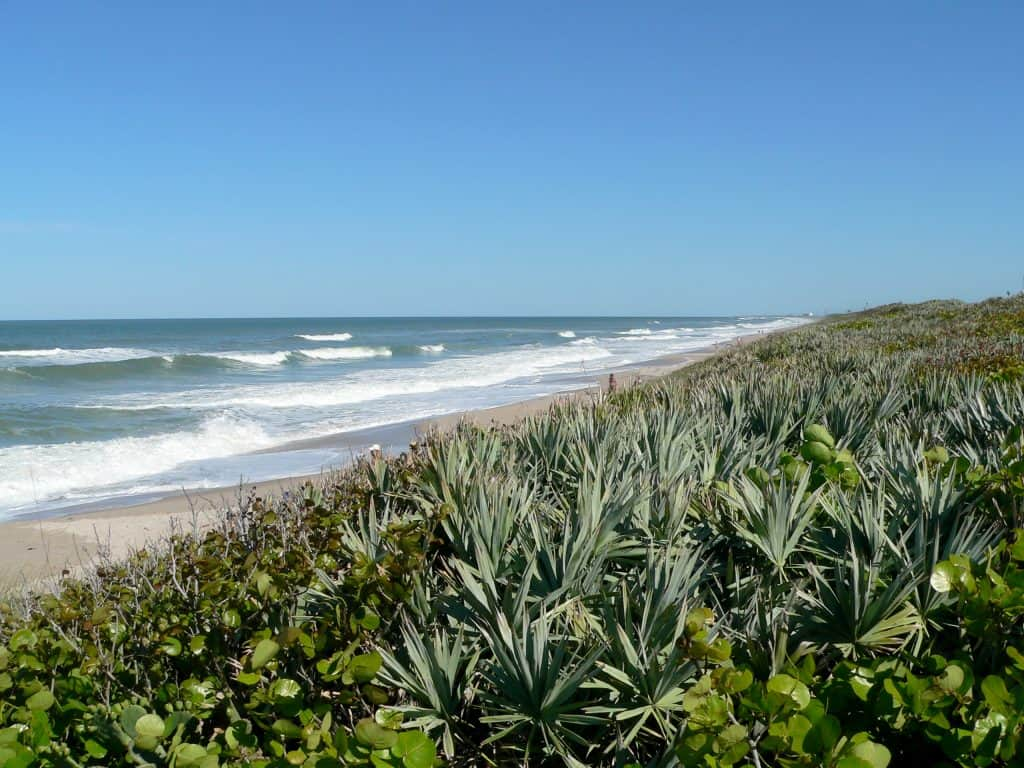 The rich foliage provides a gorgeous backdrop for Playalinda Beach, one of the best nude beaches in Florida.
