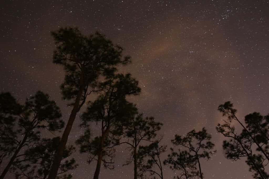 Above the tall trees of the Everglades, the night sky twinkles with stars and planets.