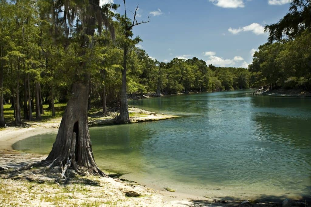 The shoreline of the Santa Fe River, one of the best places to see stars in Florida.