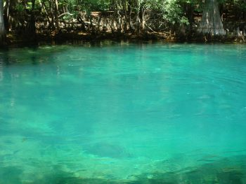 spring boil at mantee springs state park near chiefland florida