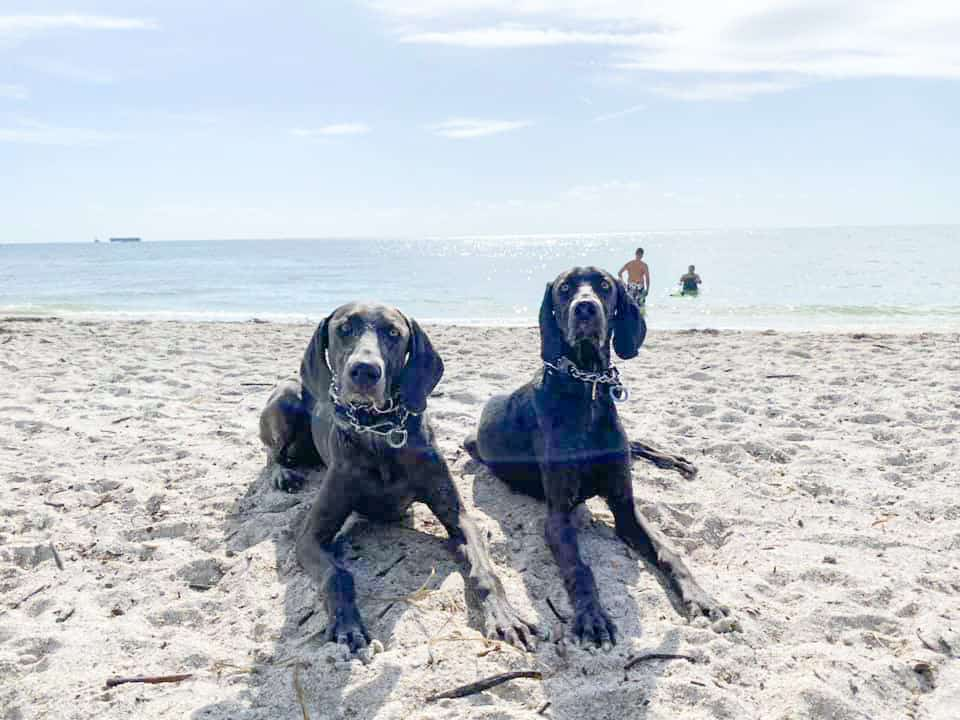 Two dogs hang out at Juno Beach, one of the best dog beaches in florida