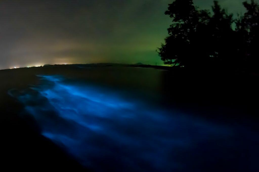 Bioluminescence lights up the waters on an evening kayaking trip, one of the best things to do in Melbourne, Florida.