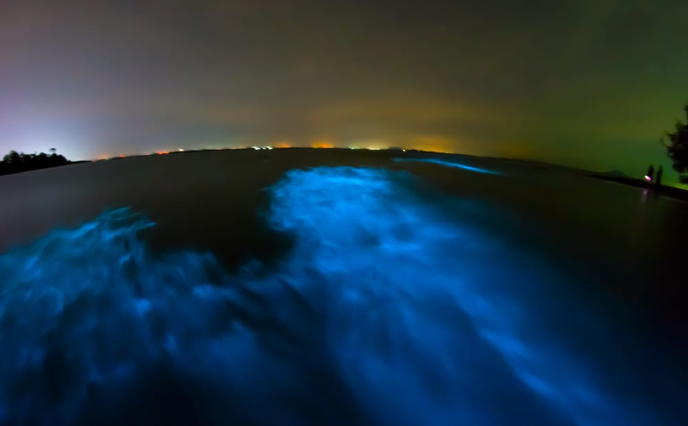 bioluminescent kayaking in central florida is truly an amazing experience