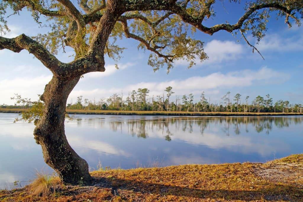 A tree provides shade near the river in Sopchoppy, Florida.
