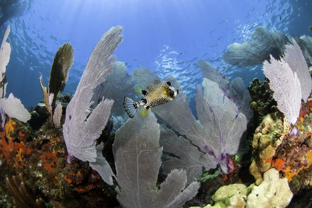 Photo underwater of the coral reef in the Florida Keys .