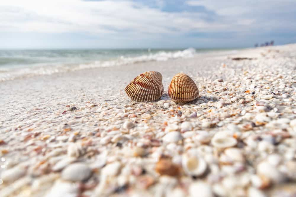 Shells on a beach in Sanibel, an option for shelling during girls getaways in Florida.